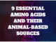 animal based amino acids